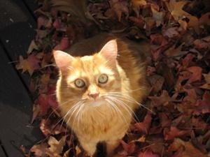 Molly Cat